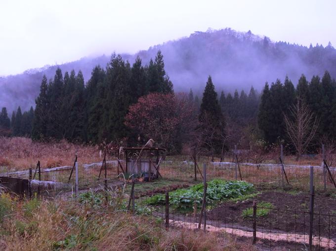 北陸の冬。畑も雪に備えて冬支度を。
