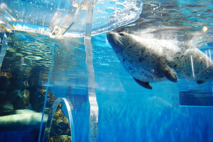 のとじま水族館の割引はコンビニで!壮大な青い世界に魅せられた話